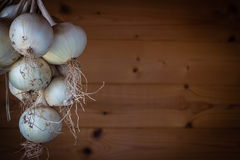 Bunch white  of onions Stock Photo
