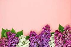Bunch of white, pink and purple lilac flowers on a coral pink background. Top view. Copy space. royalty free stock image