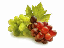 Bunch of white and red grapes Stock Photos