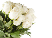 Bunch of white rose Stock Image