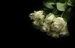 A bunch of white roses Stock Photo