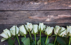 A bunch of white roses Stock Image