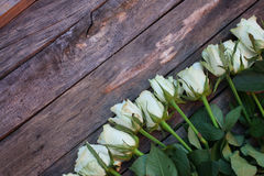 A bunch of white roses Royalty Free Stock Image