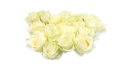 Bunch of white roses Stock Images