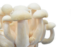 Bunch of white shimeji mushroom Royalty Free Stock Photography