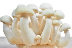 Bunch of white shimeji mushroom Stock Photo