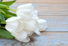 Bunch of white tulips on a blue grey knotted old wooden background with empty space layout Stock Image