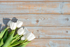 Bunch of white tulips on a blue grey knotted old wooden background with empty space layout Stock Photos