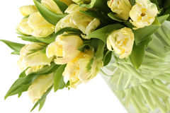 Bunch of white tulips Royalty Free Stock Images
