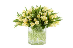 Bunch of white tulips Royalty Free Stock Photos