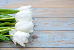 Bunch of white tulips in a row on a blue grey knotted old wooden background with empty space layout Stock Images