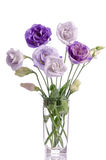 Bunch of white and violet eustoma flowers in glass vase Royalty Free Stock Images