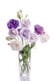 Bunch of white and violet eustoma flowers in glass vase Royalty Free Stock Photo