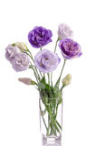 Bunch of white and violet eustoma flowers in glass vase Stock Photo
