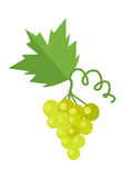 Bunch of White Wine Grape. With green leaves. Fresh fruit. Vineyard grape icon. White grapes icon. Wine grape icon. Isolated object in flat design on white Royalty Free Stock Photography