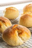 Bunch of whole, fresh baked wheat buns on cooling rack on white Royalty Free Stock Photo