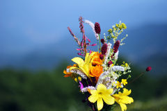 A bunch of wild flowers Royalty Free Stock Photography