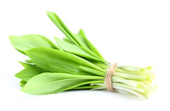 Bunch of wild garlic. Stock Images