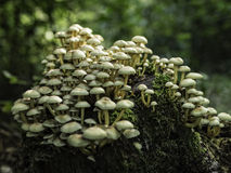 A bunch of wild mushrooms. In the green forest Stock Photo