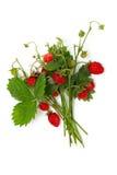Bunch of wild strawberries Stock Photo