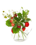 Bunch of wild strawberries Royalty Free Stock Photos