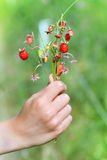 A bunch of wild strawberry Royalty Free Stock Image
