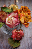 Bunch of Withered Roses Royalty Free Stock Photos