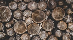 Bunch of Wood Stumps stock photos