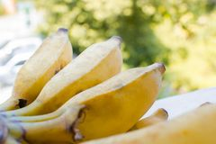 Bunch of yellow banana. Bunch of yellow banana with natural background Royalty Free Stock Photo