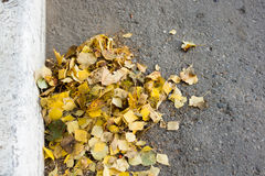 A bunch of yellow birch leaves, swept away to the edge of the road Stock Images