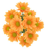 Bunch of yellow chrysanthemums. Over white Royalty Free Stock Photo