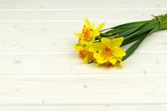 Bunch of yellow daffodil on a wooden table background royalty free stock image