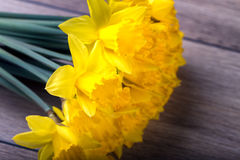 Bunch of yellow daffodils Stock Photo
