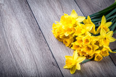 Bunch of yellow daffodils with blossom Royalty Free Stock Photo