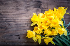 Bunch of yellow daffodils with blossom Stock Images