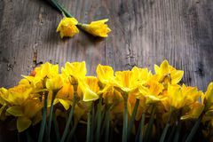 Bunch of yellow daffodils with blossom Stock Image