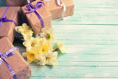 Bunch of yellow daffodils  flowers and wrapped gift boxes Royalty Free Stock Photo