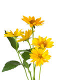 Bunch of yellow daisy flowers Stock Photography