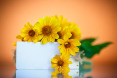 Bunch of yellow daisy flowers Stock Photo