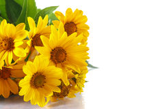 Bunch of yellow daisy flowers Stock Images