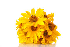 Bunch of yellow daisy flowers Royalty Free Stock Image