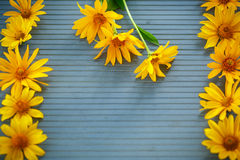 Bunch of yellow daisy flowers Royalty Free Stock Images
