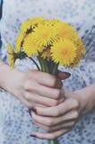 Bunch of yellow dandelions in woman's hands Stock Image