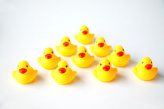 Bunch of yellow ducklings Stock Image