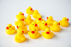 Bunch of yellow ducklings Stock Image