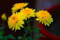 Bunch of Yellow Flower with abstract background. stock photos