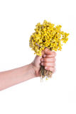 Bunch of yellow flowers in hand. Child holding a bunch of dry yellow flowers in hand Royalty Free Stock Photos