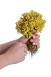 Bunch of yellow flowers in hand. Child holding a bunch of dry yellow flowers in hand Royalty Free Stock Photo
