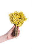 Bunch of yellow flowers in hand. Child holding a bunch of dry yellow flowers in hand Stock Images