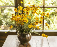 A bunch of yellow flowers. Stock Images